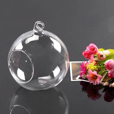 Glass Clear Flowers Plant Table Hanging  Vase Ball Terrarium Container Bottle