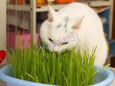 1Bag 30g Harvested Cat Grass approx 800 Seeds Organic Cat snack