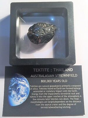 """RARE"" 21.3 Gram TEKTITE Museum Quality with stand and label"