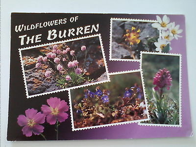 John Hinde Postcard Wildflowers of The Burren Co. Clare   (A1)