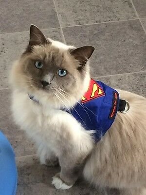 Mynwood Cat Walking Jacket Harness Vest Holster SUPERMAN Adult or Kitten