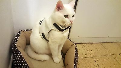 Mynwood Cat Walking Jacket Harness Holster CREAM FLEECE Adult cat or Kitten