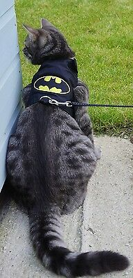 Mynwood Cat Walking Jacket Harness Vest Holster BATMAN Adult or Kitten
