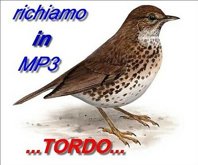 Richiamo Per Uccelli... Richiami In Mp3....speciale Tordo!!!!