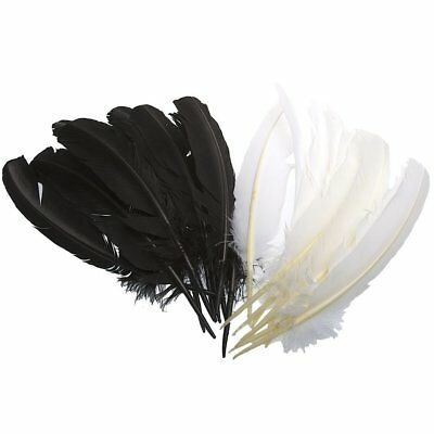 """White Feather 10""""-12"""" (Sold Individually)"""