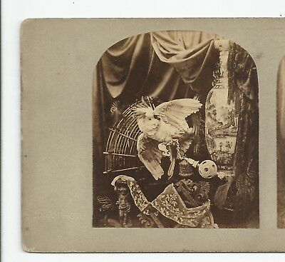 Stereo Stereoview Genre Chinese Ball Parrot China London T.R. Williams 1850er