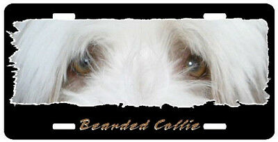 "Bearded Collie "" The Eyes Have It "" License Plate"