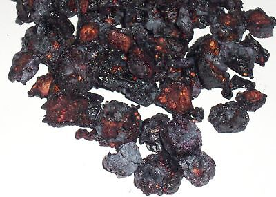 NEW Dried Blueberry by Tropical Harvest QLD