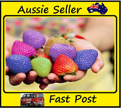 Strawberry Seeds Multi-Color Rainbow Strawberries Home Garden 400 Seed Lots