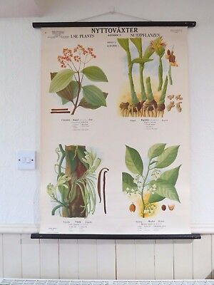 Vintage Pull Roll Down Botanical School Wall Chart Spices Plants Ginger Vanilla