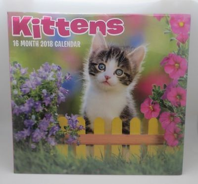 Kittens Kitty 2018 Wall Calendar 16 Month - includes last 4 months 2017 BNIS