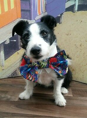 Dogs Happy Birthday Bow Tie on Cotton Collar handmade by Mrs Nibbles