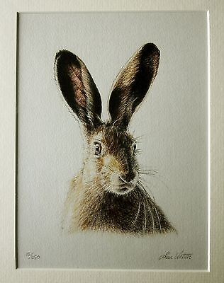 Limited edition pencil signed print from a colour drawing of a brown hare