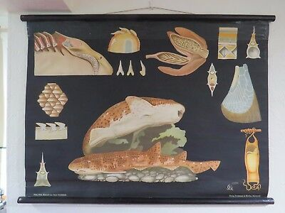 Rare Vintage Jung Koch Quentell Pull Down School Wall Chart Of Spotted Catshark