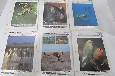 Wildlife Fact File - 1 Binder - about 150 cards