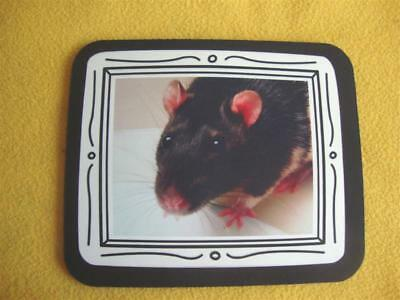 Rat Photo Mousepad from Petrats