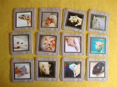 Rat Photo Matching Card Game from Petrats