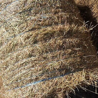 Lucerne, grass hay, small bales,rolls