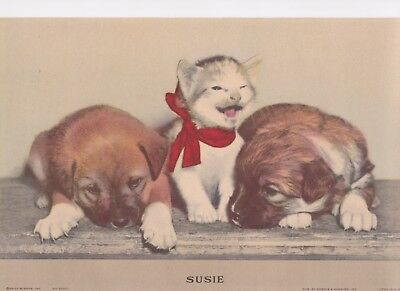 1940 Lithograph Cat and dog picture, Susie the Cat, Susie Litho Print, vintage w