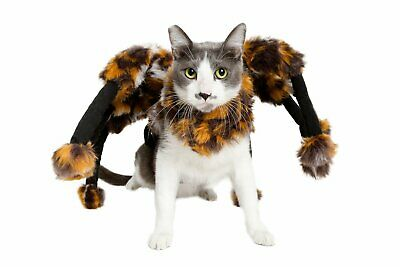 Scary Spider Cat Costume for Halloween