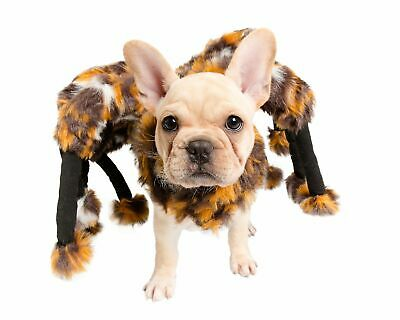 Scary Spider Dog Costume for Halloween