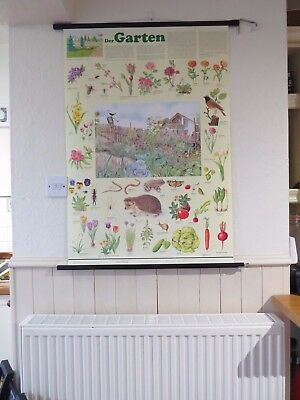 Vintage Pull Roll Down School Wall Chart Of The Garden - Flowers Animals Plants