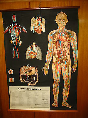 Italy Vallardi Human Body Circulatory System Anatomy Map Mappa Carte Karte