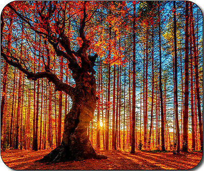 Scenic Forest Fall Autumn Trees Large Mousepad Mouse Pad Great Gift Idea