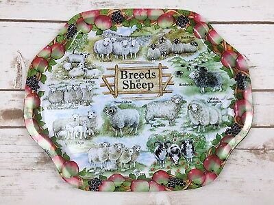 "Breeds of Sheep Metal Tray 11 Different Breeds 13"" x 10.75"" Collectible Gift"