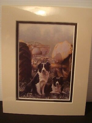"""Heros Of The Hills Matted Print By Artist John Silver 8""""x10"""" Border Collie"""