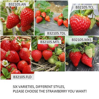 100 Red Strawberry Seeds, Garden Fruit Plant, Meaty And Delicious, 6 Types