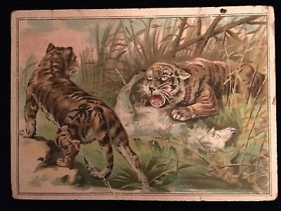 Vintage Lion Coffee Trading Card Tiger Wild Big Cat #4