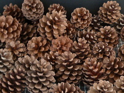 PINE CONES 18 SMALL  7cm Christmas Pinecone Christmas decorations Craft