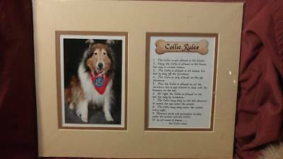Rough Collie Rules Dog Picture - 100% to Rescue