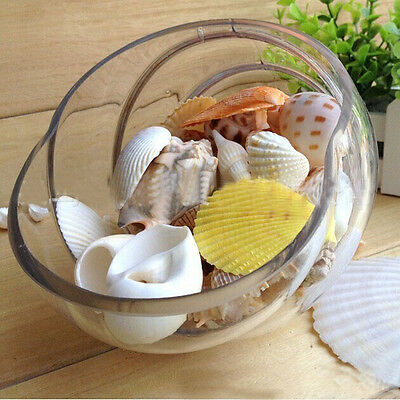 Natural Mixed Craft Sea Shells Wedding Table Seashells Decor Aquarium 100G