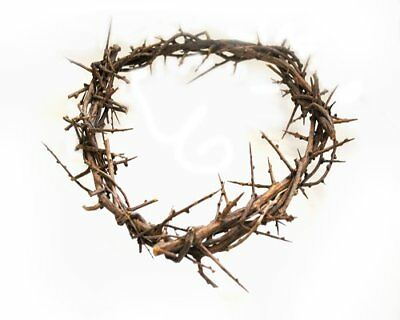 """Crown of Thorns From The Holy Land 7"""""""