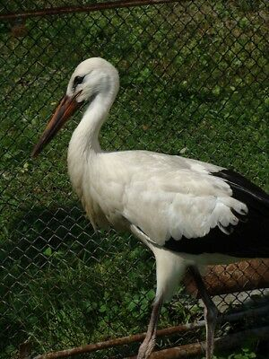 Digital Picture Image Photo Wallpaper JPG Stork Desktop Screensaver