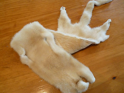 WEASEL STOAT Ferret? Pelt Tanned Fur Hide  for Craft,  Taxidermy?