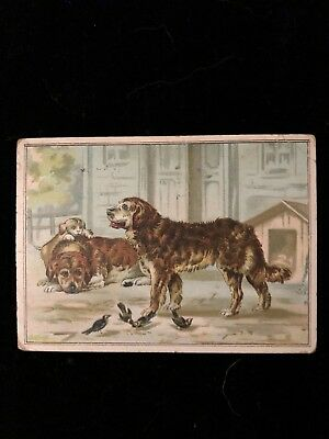 Vintage LION COFFEE Trading PICTURE CARD # 6 Dogs Puppy Birds Doghouse Animals