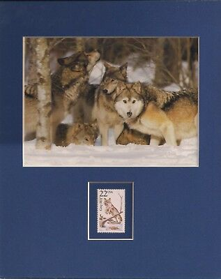 Wolves - Wolf Pack - Winter - Frameable Postage Stamp Art - 0219