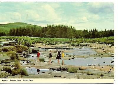 On the Raiders Road Galloway Forest Park  Postcard  POSTED