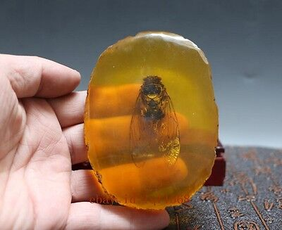 China Old Amber Unique cicada Amber classic art collection