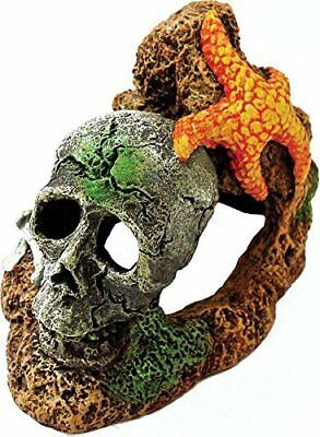 006052 Exotic Environments Skull with Starfish