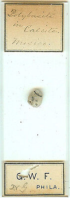 Polybasite in Calcite from Mexico Microscope Slide by G. W. F.
