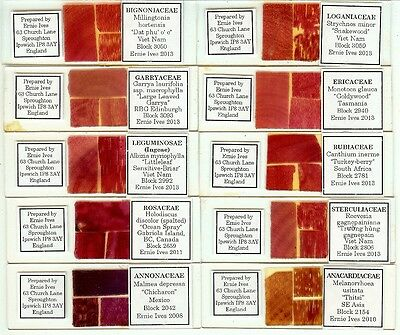 Various spp. Tree Woods from Various Locations Microscope Slides by Ernie Ives