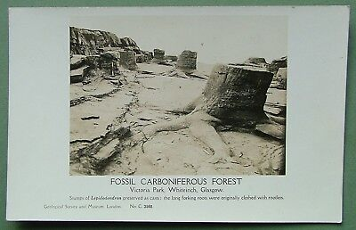 Real Photo Postcard - Fossil Carboniferous Forest, Victoria Park, Glasgow