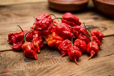 20 Graines Carolina Reaper  , The World's Hottest Pepper seeds