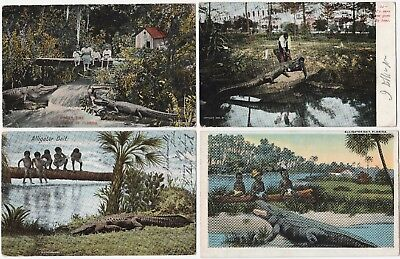 Postcard LOT of 6 - Black African American & Alligators Florida 1906-1910 era