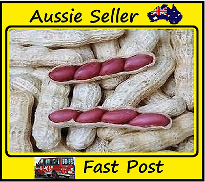 Chinese 4 Peanuts In 1 Shell Red Skin Rare Organic Heirloom Seeds 10 Seed Lots