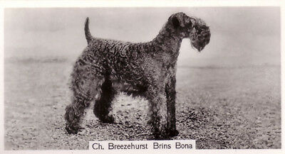 DOG Kerry Blue Terrier (Named), Photo Trading Card 1938